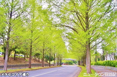 多摩センター・唐木田 (24).jpg