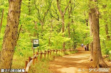 松が丘 (13).jpg